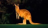 jeu du kangourou